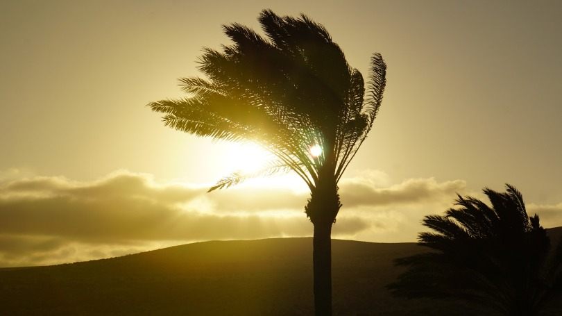 palm-trees-4392365_1920